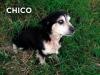 Chico-01