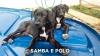 Samba-Polo-01