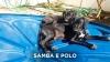 Samba-Polo-02